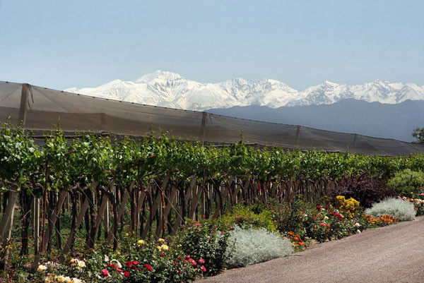 Mendoza - Winery (Central Oasis)
