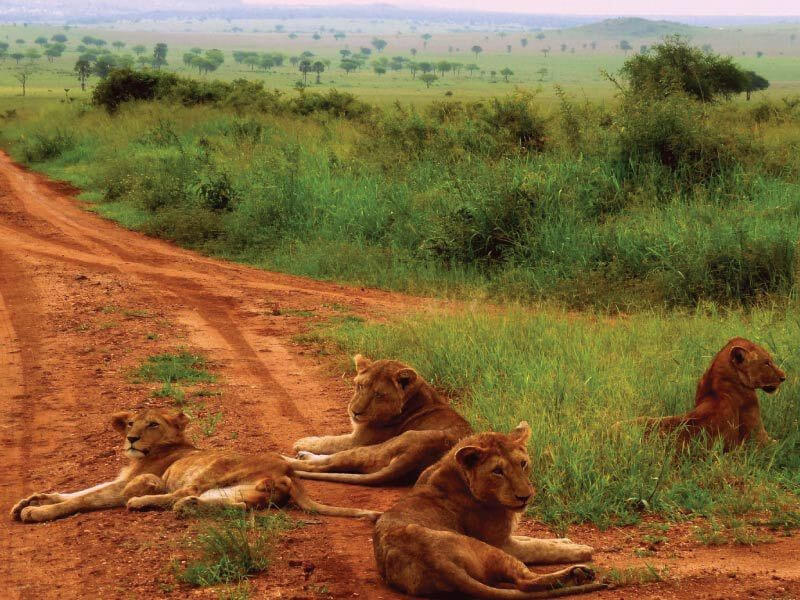 Kidepo valley national park- game drive