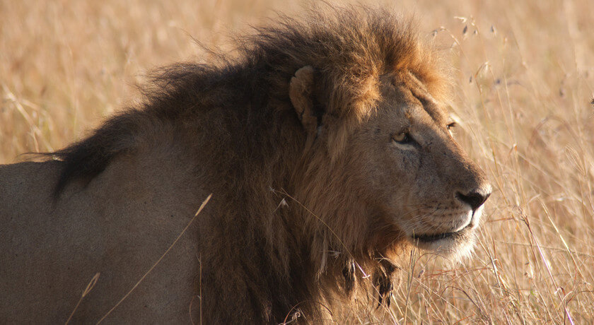 BIG CATS – PHOTOGRAPHIC MARA RIVER CROSSING - AUGUST TO OCTOBER