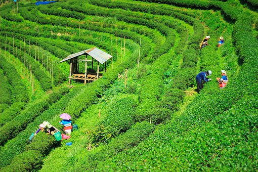 Wonderful Chiang Rai (B,L)