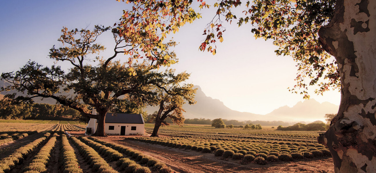 Franschhoek - The Heart of the Winelands