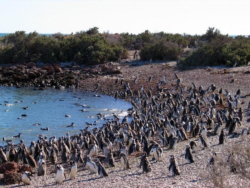 Puerto Madryn - Punta Tombo