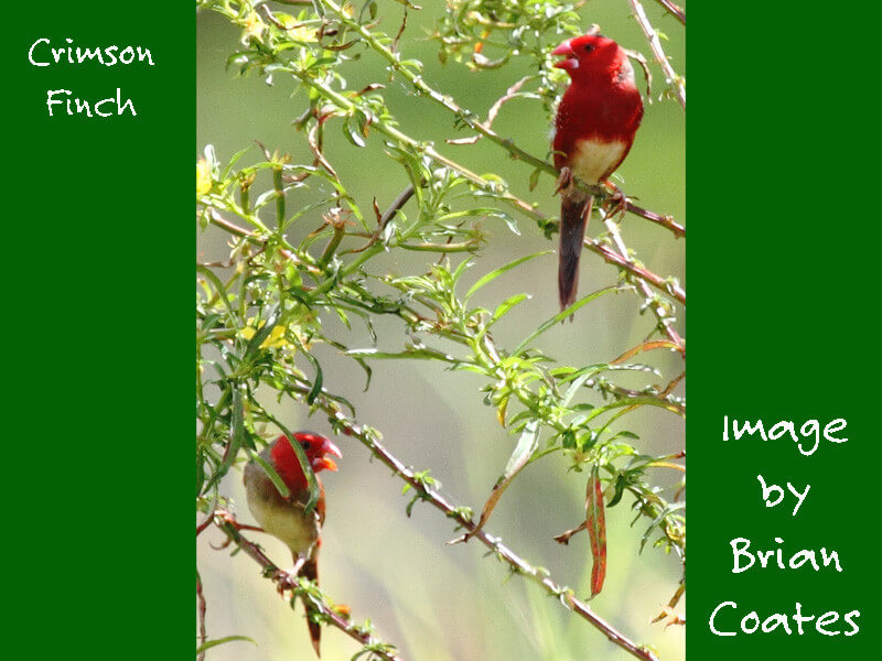 Birding Experience in PNG
