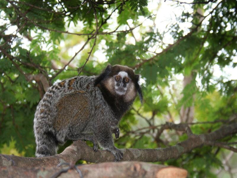 Samba, waterfalls and the Pantanal in 8 days