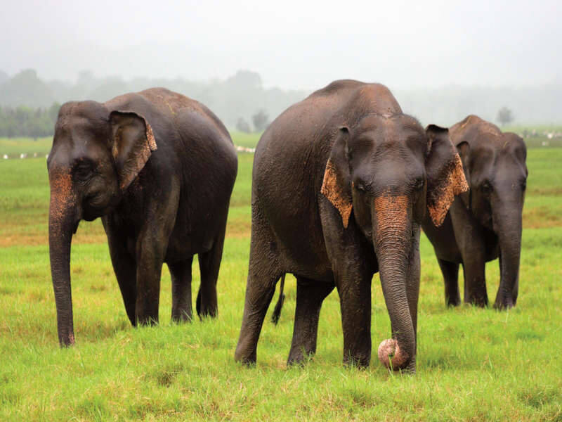 Discover Sri Lanka's Wild Side