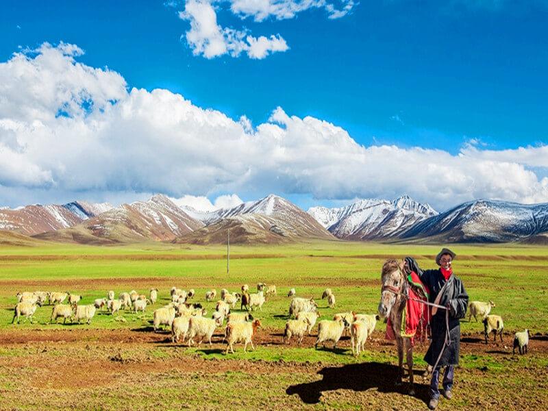 5 Days Lhasa to Yamdrok Lake Tour