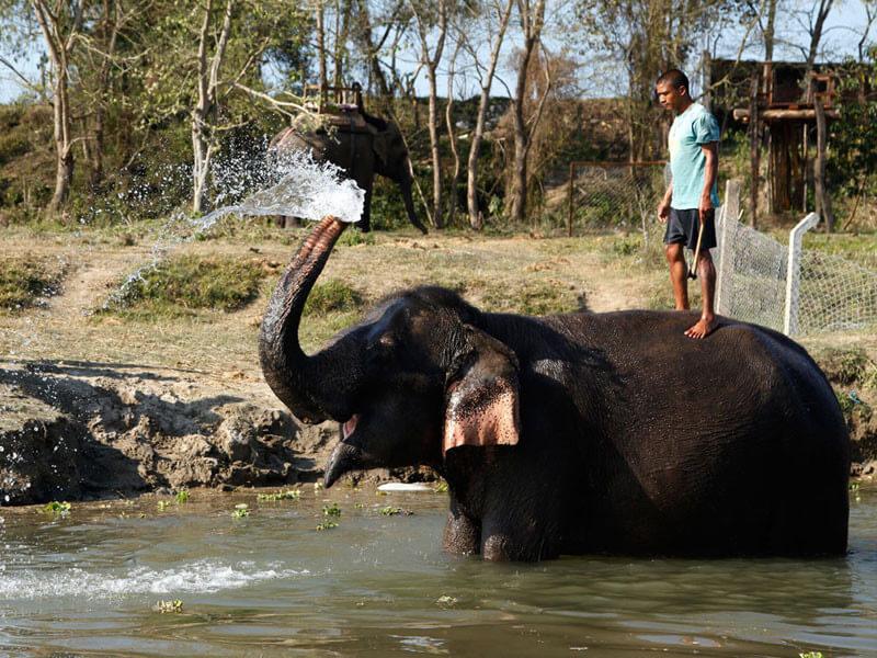 Chitwan National Park Jungle Safari