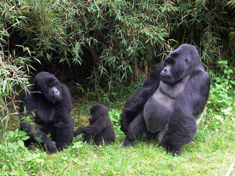 Wildlife combined with chimp and gorilla trekking and the A mazing Batwa culture