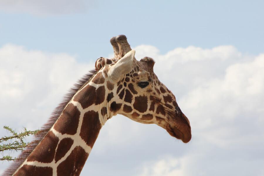 9-Day Wings Over Kenya Safari