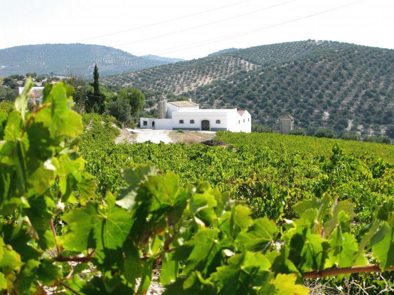 Andalucia: Gourmet Tour