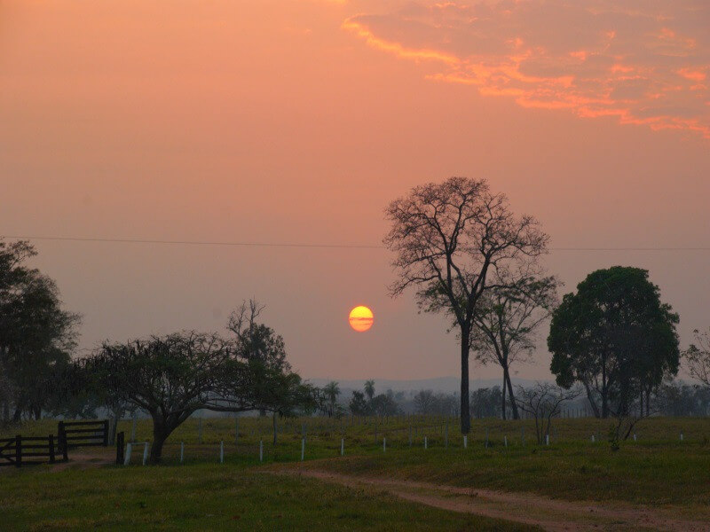 Horse-trekking in the Southern Pantanal for 4 days