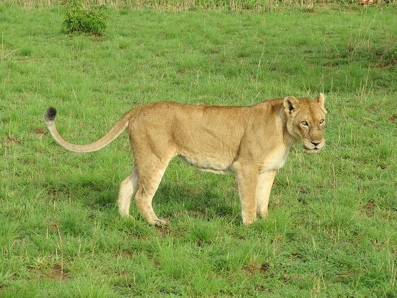 5 Days Queen Elizabeth & L.Mburo Nationa Park