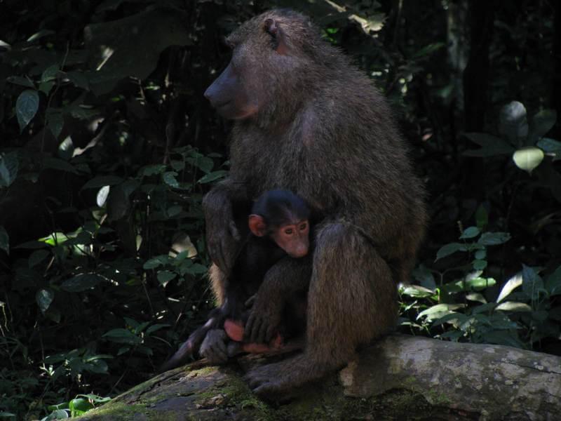 10 Days Uganda - Tanzania Wildlife/ Primates