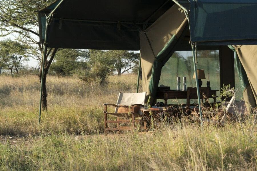 Enjoy Game View in Serengeti