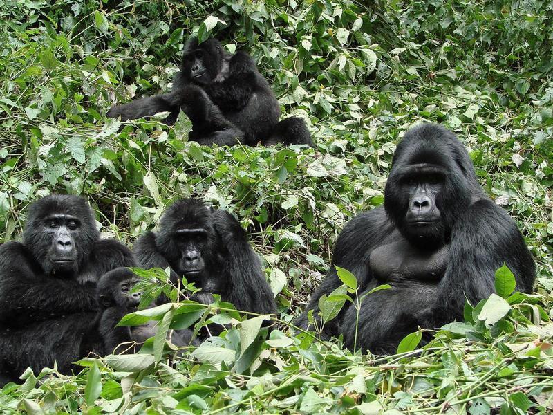 11 Days Uganda - Rwanda Wildlife / Primates