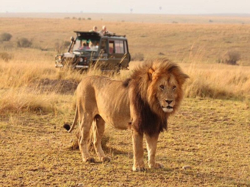 11 Days Uganda - Kenya Wildlife/ Primates
