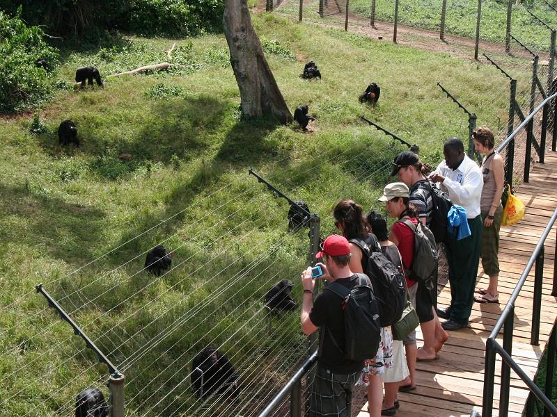 8 Days Primates Uganda