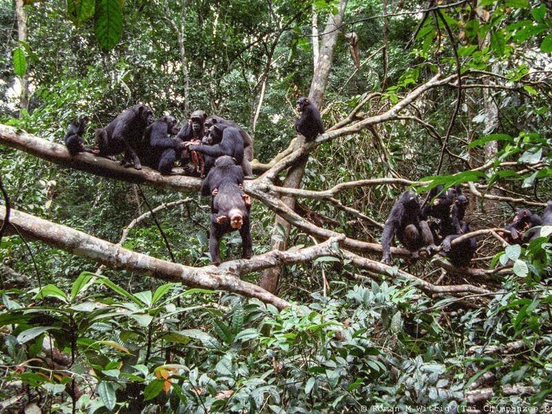 11 Days and 10 Nights Apes and Wildlife with lake Bunyonyi safari in Uganda