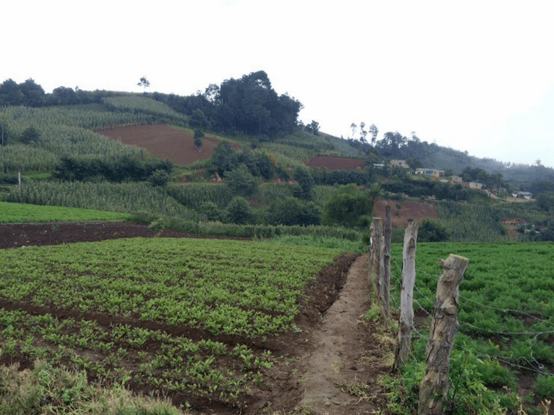 AGROTOURISM IN THE CHIPIACUL COMMUNITY