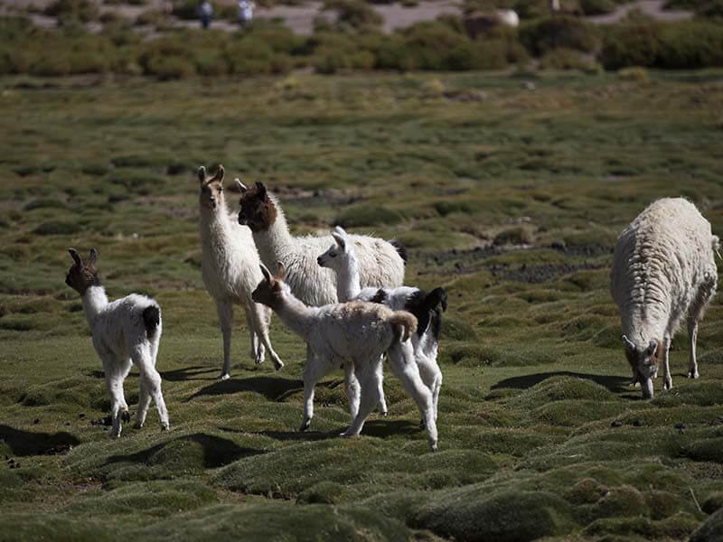 Uyuni Salt Flat - the biggest salt flat!