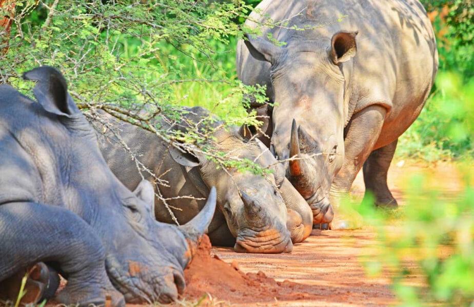 Explore Murchison Falls National park