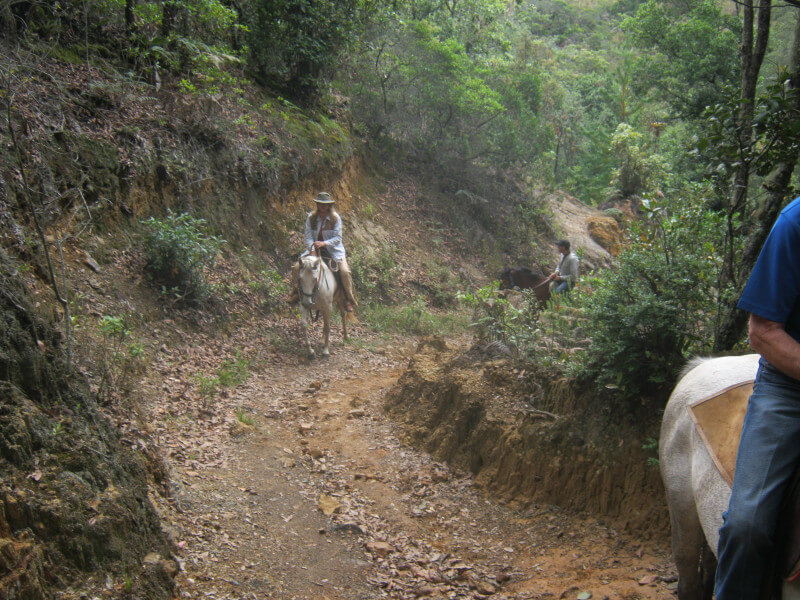 Colombia Private Tailor-Made 3 Days Horse Riding Tour