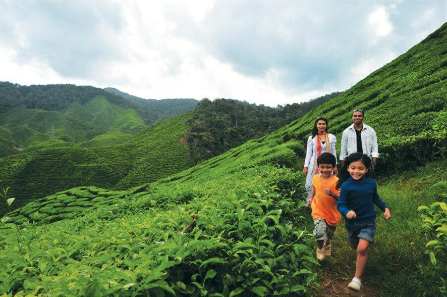Kuala Lumpur– Cameron Highlands (220 km)