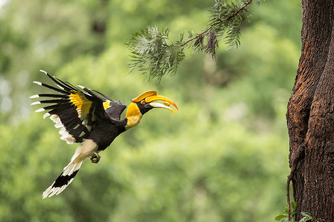 Exploring Birds of Bhutan