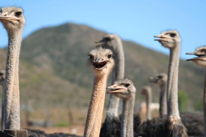 6 Day Cape to Addo Garden Route Safari Tour (return)