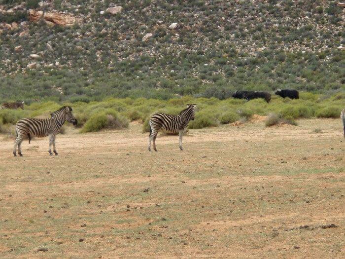 7 Days Cape Town & Garden Route Tour (return)