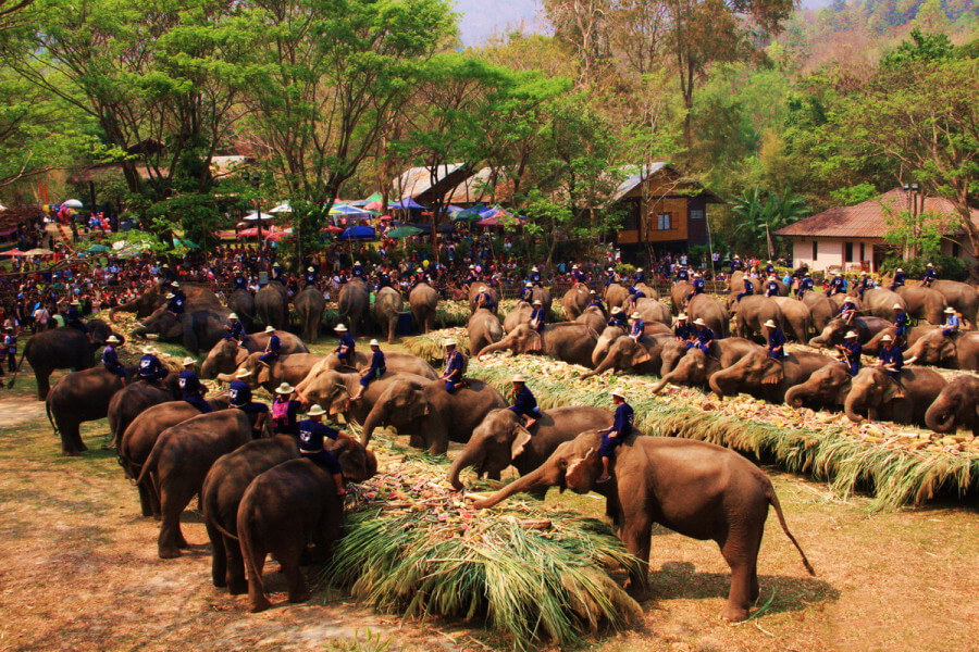 7 DAYS/6 NIGHTS ELEPHANT EXPERIECE IN LAOS