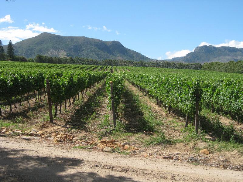 קייפטאון ודרך היין