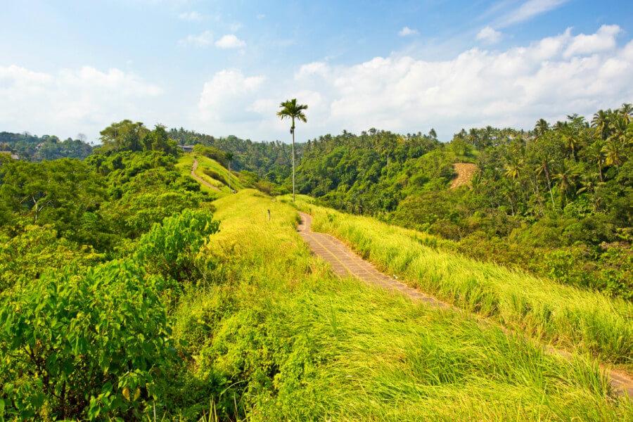 5D4N Bali Package