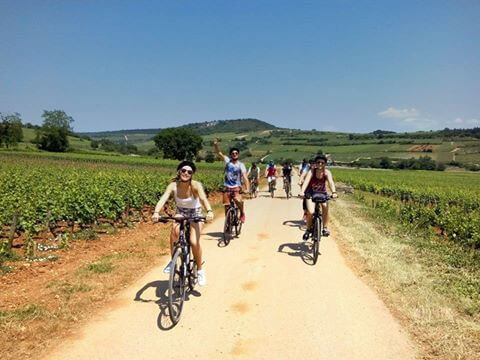 Burgundy Wine Trails
