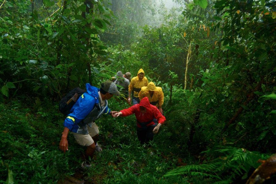 Rain Forest trekking