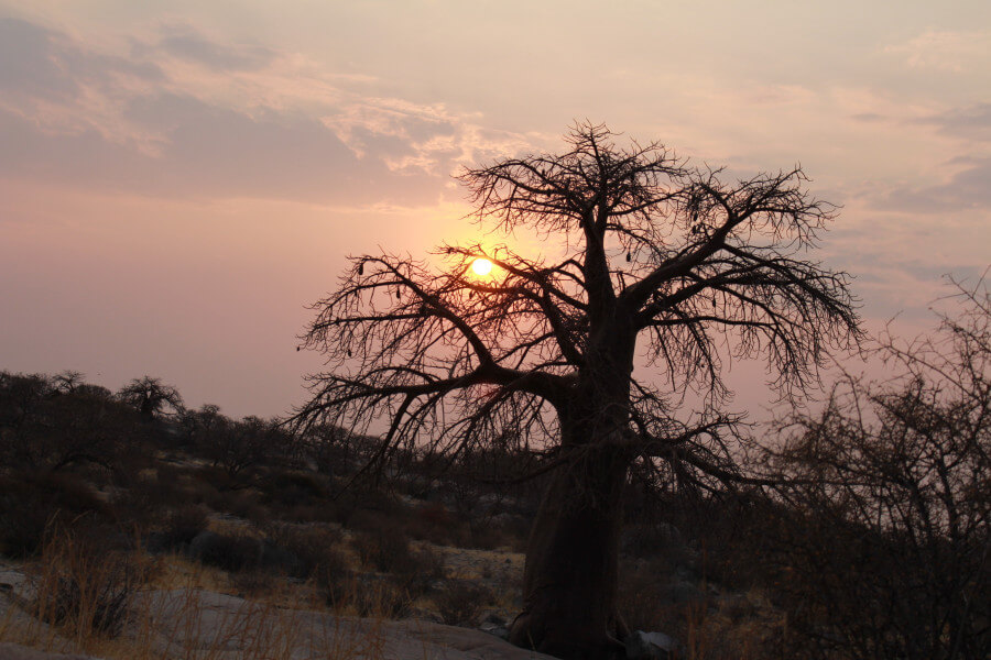 TRIP TO CENTRAL KALAHARI GAME RESERVE