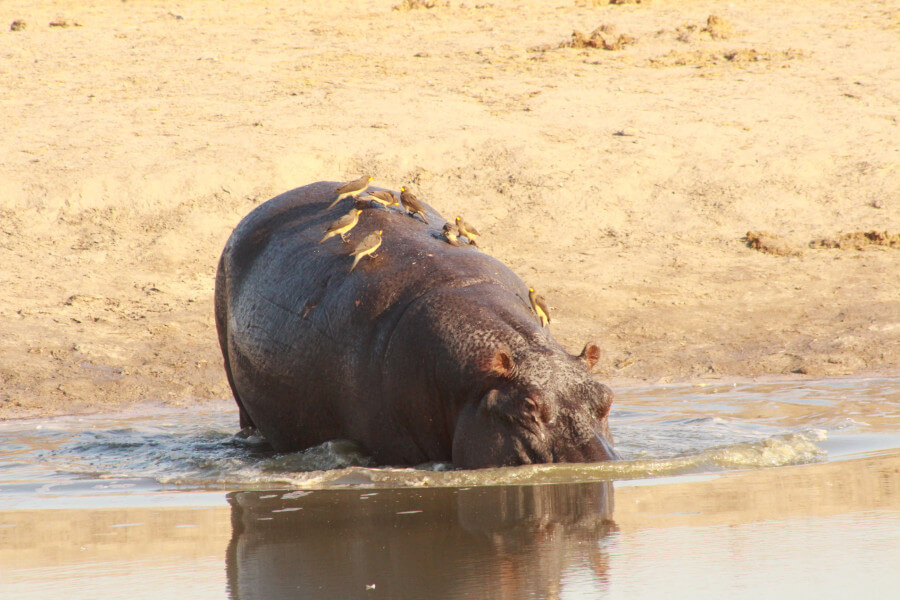Trip to Moremi Game Reserve