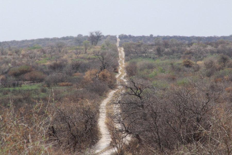 CHEETAH SAFARI TRAIL-13 DAYS