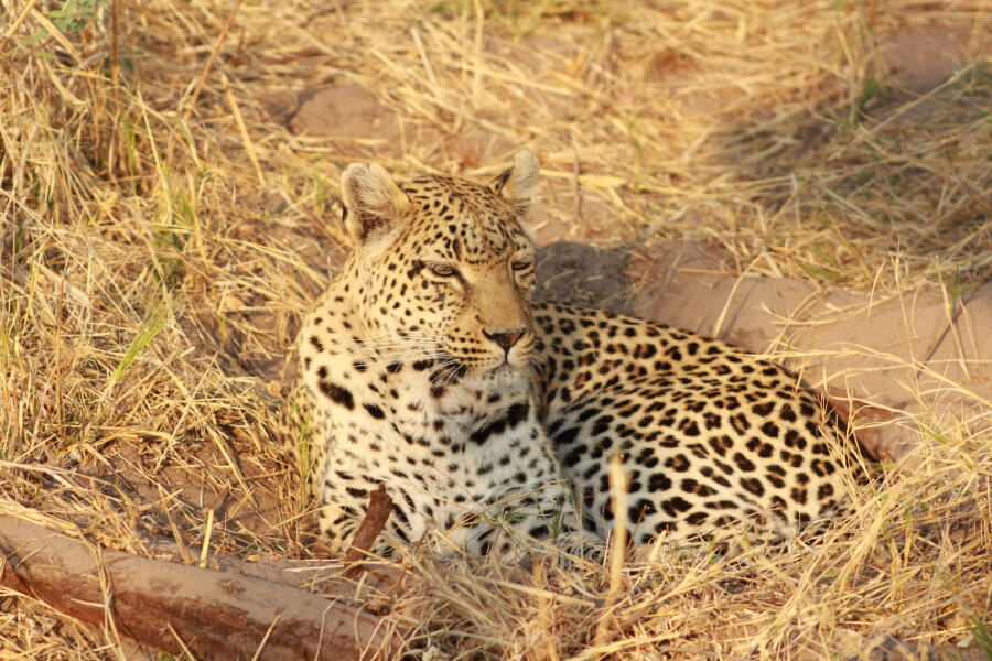 Leopard Safari Trail - 10 Days
