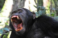 13 Days Primate & Cultural Tours