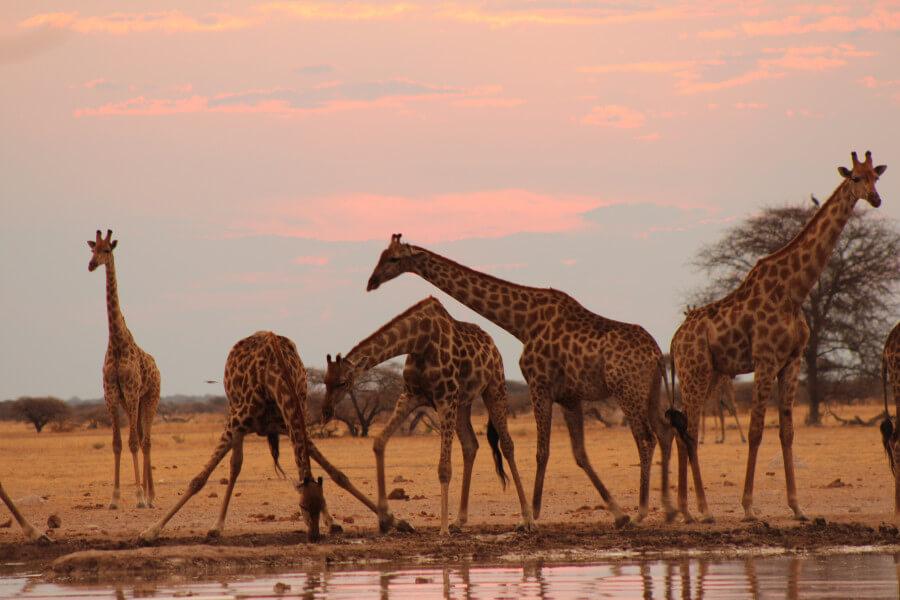 Trip to Makgadikgadi Pan National Park