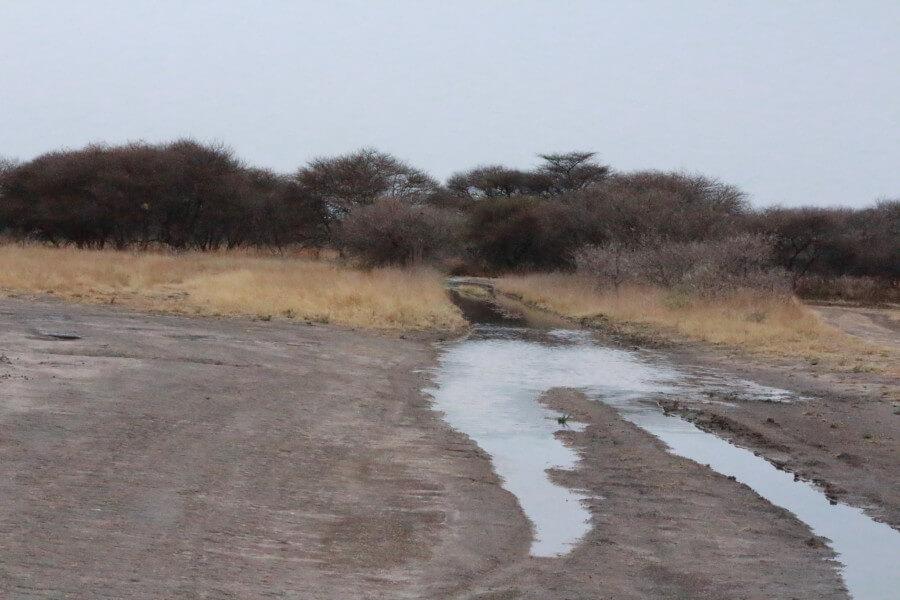Trip to Central Kalahari Game Reserve