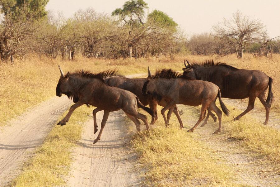 Trip to Chobe National Park
