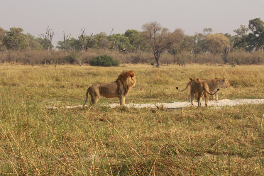 ELEPHANT SAFARI TRAIL - 7 DAYS