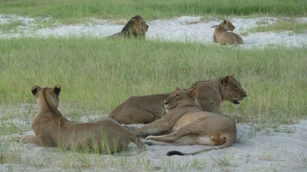 Buffalo Safari Trail - 16 Days