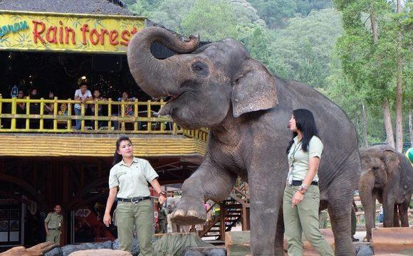 Taman Safari Indonesia Tour