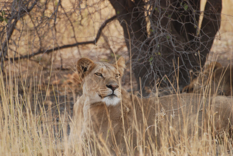 Springbok Safari Trail - 8 days