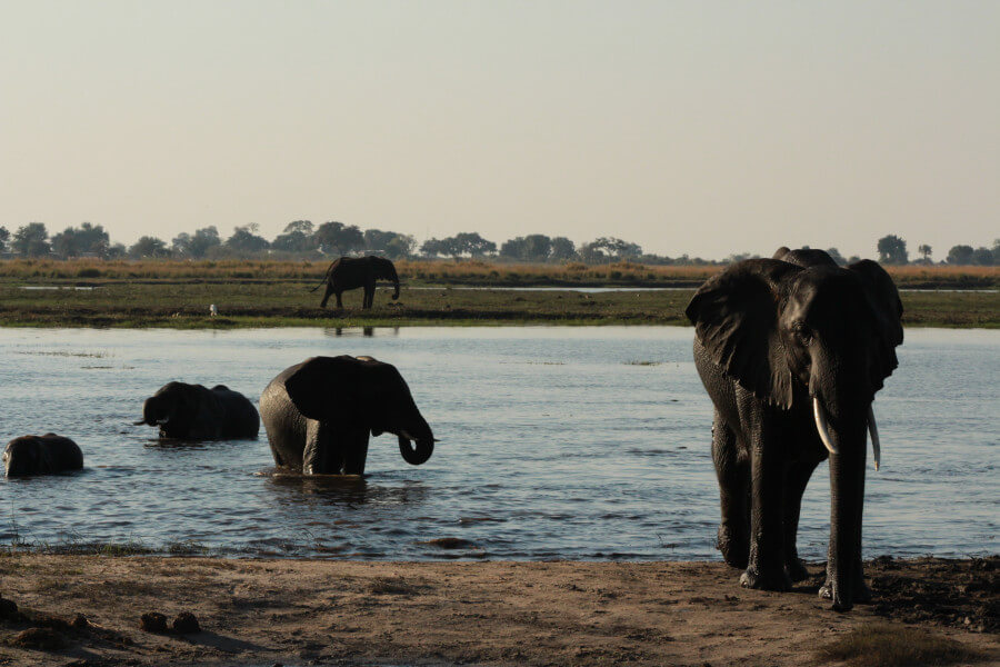 Trip to Chobe National Park