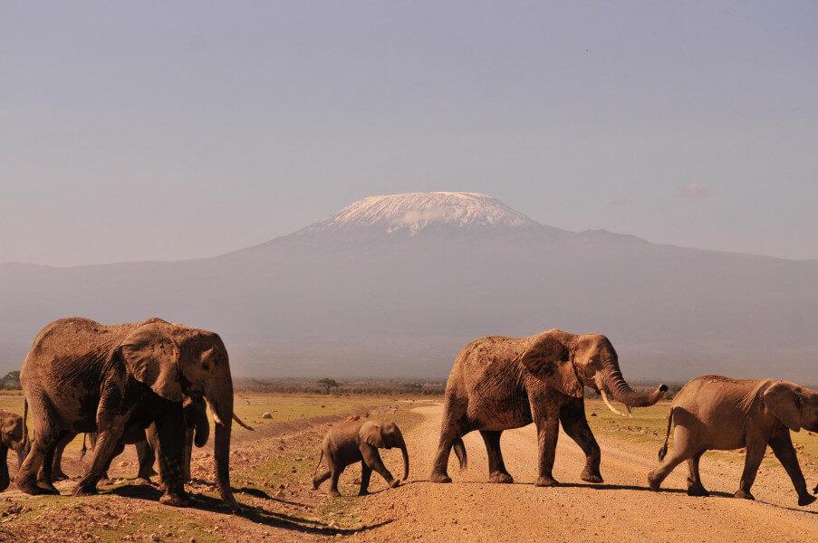 Nairobi - Amboseli- 256km/ 4hrs drive