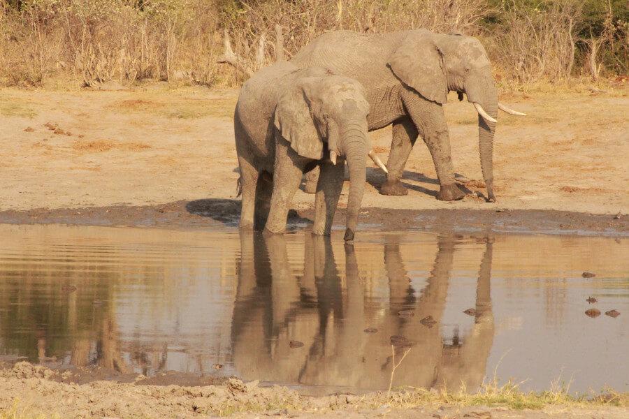 Giraffe Safari Trail- 12 Days